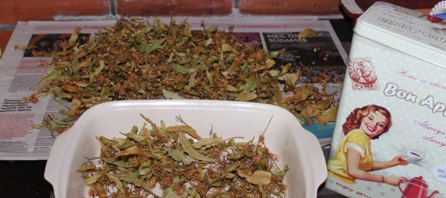 Helena-Reet: Jag odlar, plockar och torkar växter för vintern + LITE kunskap om hur olika örter verkar!