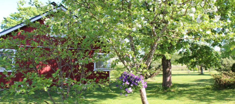 Helena-Reet: Lev på landet – fågelsång som väckarklocka